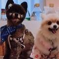 犬のお見合いパーティ@銀座:愛犬の友だちやお嫁さん・お婿さん、そしてペット仲間を気軽に探す方法