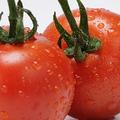 これなら、できる!「新トマトダイエット」のやり方と、体験感想(by 発見!ウワサの食卓)